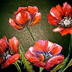 Flowers...Poppies by © Janis Zroback