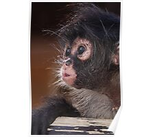 Young Spider Monkey Poster