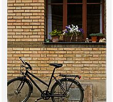 A Good Day for a Bicycle Ride by Dania Reichmuth