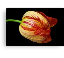 Fiery Belle Canvas Print
