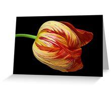 Fiery Belle Greeting Card