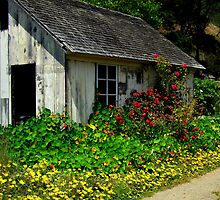 Old Sonoma Coast Cottage, near Albion, N. California by Ascender Photography