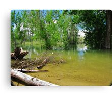 Let's Check It Out!!! Canvas Print