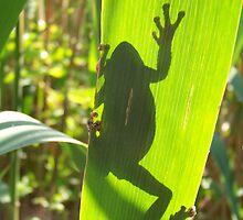 Grey Tree Frog by Dandelion Dilluvio