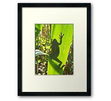 Grey Tree Frog Framed Print
