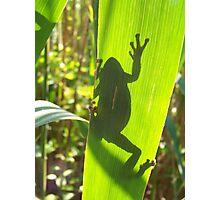 Grey Tree Frog Photographic Print