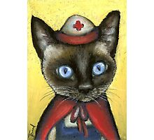 Nurse cat Photographic Print