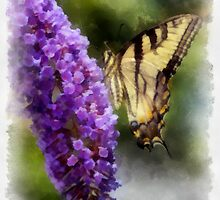 Butterfly Kisses  by JHRphotoART