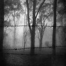 The Minds Mist  by Matt Bottos