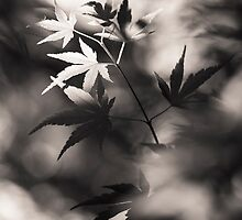 Maple In Monochrome by ghd-photography