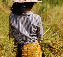 Cambodian Girl at the Rice Harvest by lgusem