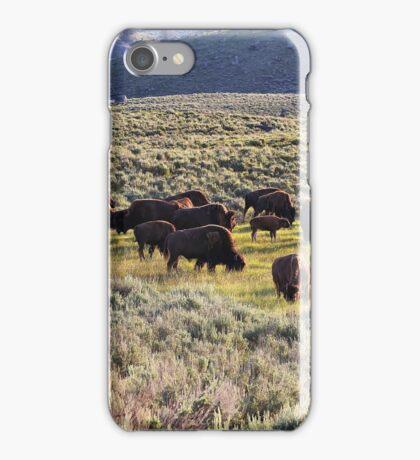 Buffalo Herd in Yellowstone NP  iPhone Case/Skin