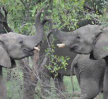 Elephants Playing on Safari by Rod Hawk