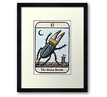 The Molar Beetle Framed Print