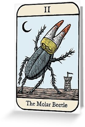 The Molar Beetle by Ellis Nadler