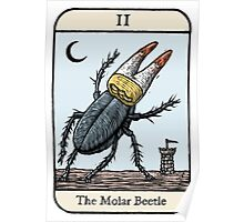 The Molar Beetle Poster