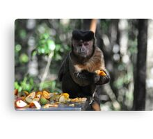 Monkey in South Africa Canvas Print