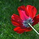 Tulip Flipside by Monnie Ryan
