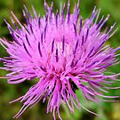 Purple & Pink by Sandra Moore