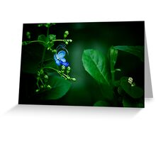 Mock Butterfly Greeting Card