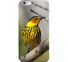 Cape May Warbler 2 iPhone Case/Skin