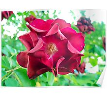 My Precious Flower Poster