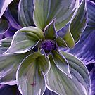 My Colorful Plant by Michael Degenhardt