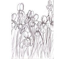 Drawing Day 2010 - Irises Photographic Print