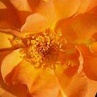 Orange Petals by MoonLiteStudio