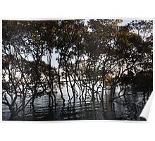 Water trees  Poster