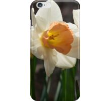 In Conversation - a Couple of Daffodils Huddled Together iPhone Case/Skin