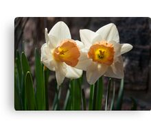 In Conversation - a Couple of Daffodils Huddled Together Canvas Print