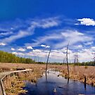 Barren Wetlands_1 by sundawg7