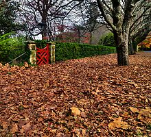 The Red Gate | Autumn Mt Mount Wilson | NSW | The Blue Mountains by DavidIori