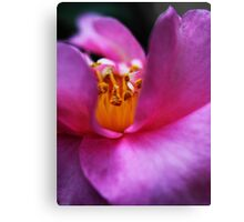 Pink Camellia's Heart Canvas Print