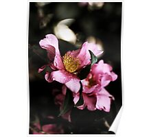 Camellias In The Rain Poster