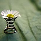 Spring by Ellen Jones
