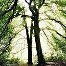 Sunlight through trees, Trentham Gardens, UK. by Steve Crompton