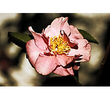 Not Just Another Pretty Camellia Photographic Print