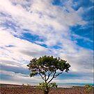 Mangrove by Kym Howard