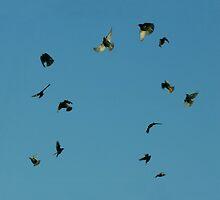 Flight by Jean Gregory  Evans