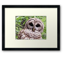 Colors of Nature - Owl 001 - Who Me ? Framed Print