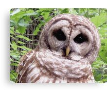 Colors of Nature - Owl 001 - Who Me ? Canvas Print
