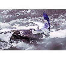 Blue Heron - Balance Photographic Print