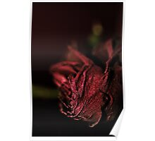 Dried Flowers Series -Red Rose- Poster