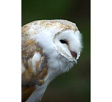 Small Owl Photographic Print