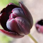 Tulip 1 by SpiralPrints