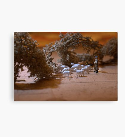 Where does the flock go for the summer? Shepherd Marvin said, 'I herd it through the grapevine' Canvas Print