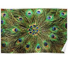 Peacock Feather Fan - Handcrafted Poster