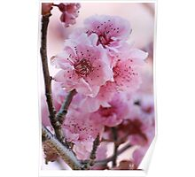 Spring Is In  The Air Poster